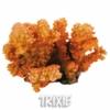 Oranžový korál