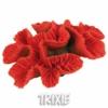 Červený korál