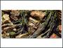 Pozadí AE Root 100 x 50 cm