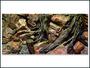 Pozadí AE Root 120 x 50 cm