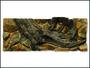Pozadí AE Amazonia 120 x 50 cm